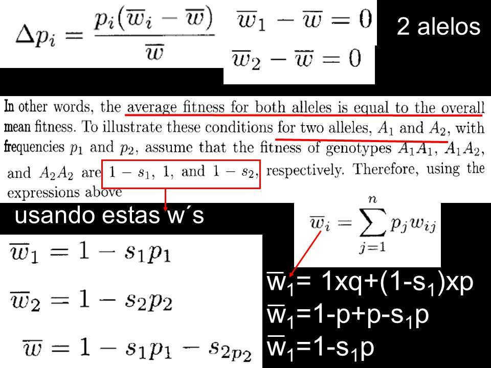 w 1 = 1xq+(1-s 1 )xp w 1 =1-p+p-s 1 p w 1 =1-s 1 p 2 alelos usando estas w´s