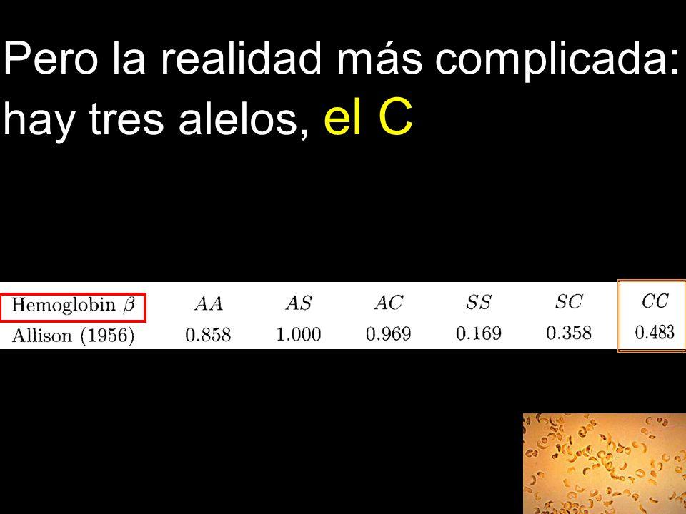 Pero la realidad más complicada: hay tres alelos, el C