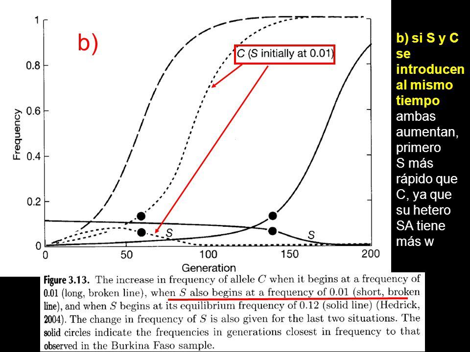 b) si S y C se introducen al mismo tiempo ambas aumentan, primero S más rápido que C, ya que su hetero SA tiene más w b)