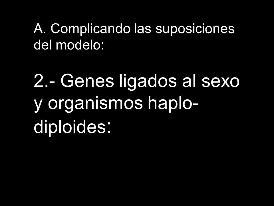 A. Complicando las suposiciones del modelo: 2.- Genes ligados al sexo y organismos haplo- diploides :