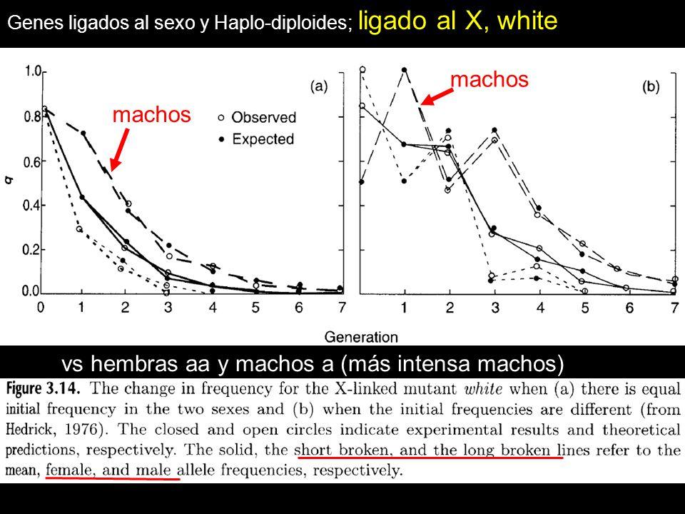 Genes ligados al sexo y Haplo-diploides; ligado al X, white machos vs hembras aa y machos a (más intensa machos)
