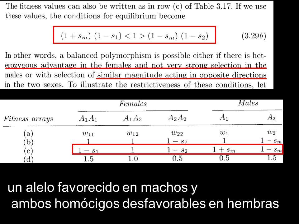 un alelo favorecido en machos y ambos homócigos desfavorables en hembras