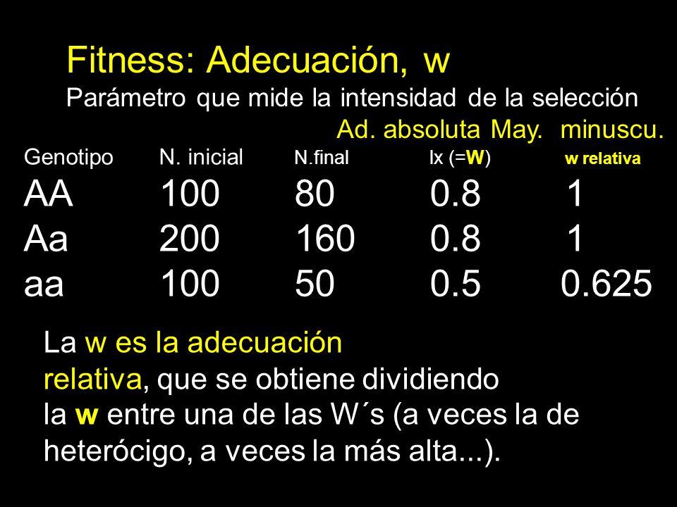 Fitness: Adecuación, w Parámetro que mide la intensidad de la selección Ad. absoluta May. minuscu. Genotipo N. inicial N.finallx (=W) w relativa AA100
