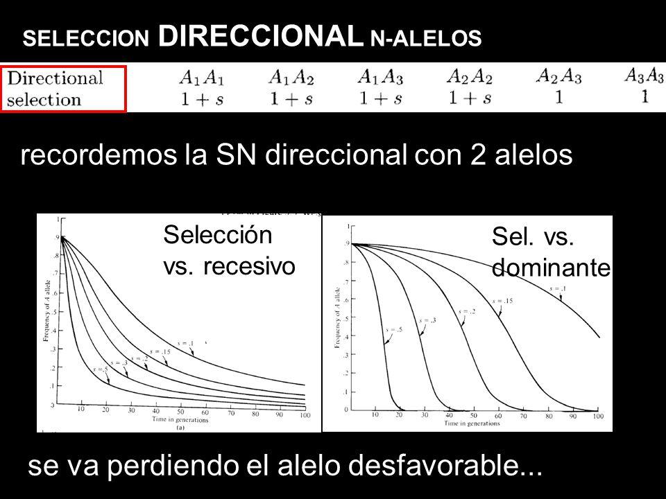 SELECCION DIRECCIONAL N-ALELOS Selección vs. recesivo Sel. vs. dominante recordemos la SN direccional con 2 alelos se va perdiendo el alelo desfavorab