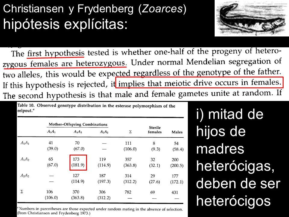 Christiansen y Frydenberg (Zoarces) hipótesis explícitas: i) mitad de hijos de madres heterócigas, deben de ser heterócigos