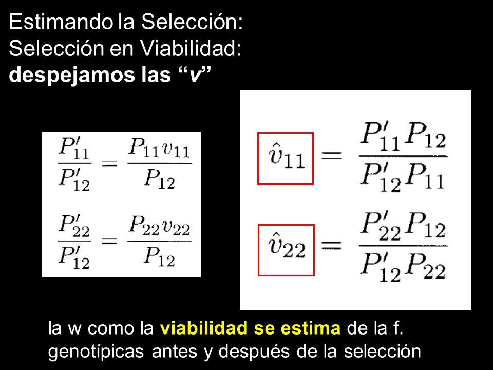 Estimando la Selección: Selección en Viabilidad: despejamos las v la w como la viabilidad se estima de la f. genotípicas antes y después de la selecci