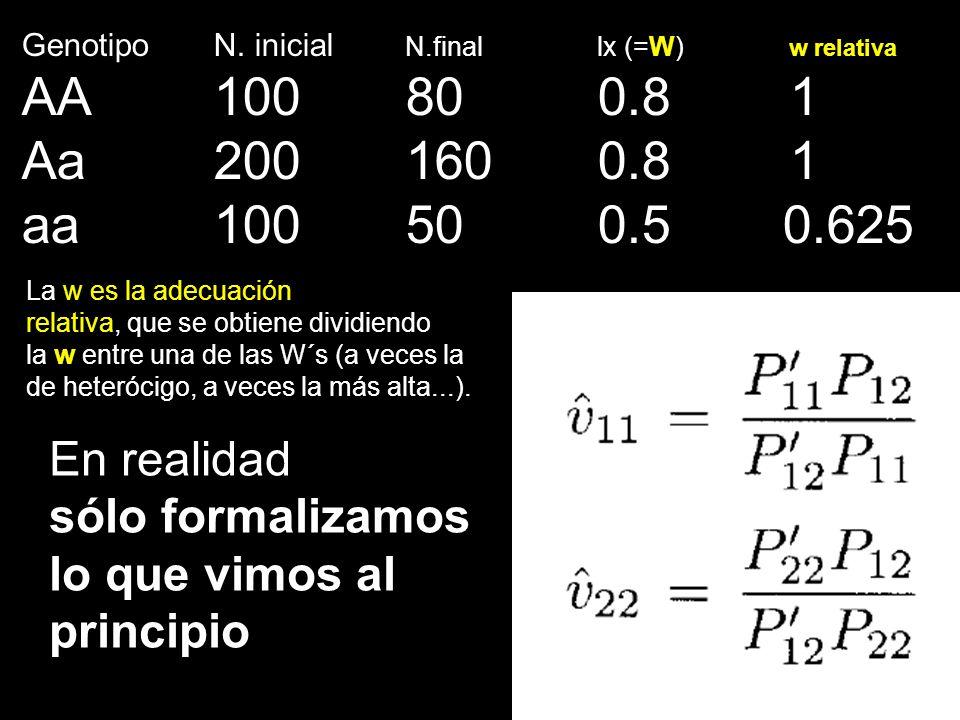 Genotipo N. inicial N.finallx (=W) w relativa AA100800.81 Aa2001600.81 aa100500.5 0.625 La w es la adecuación relativa, que se obtiene dividiendo la w