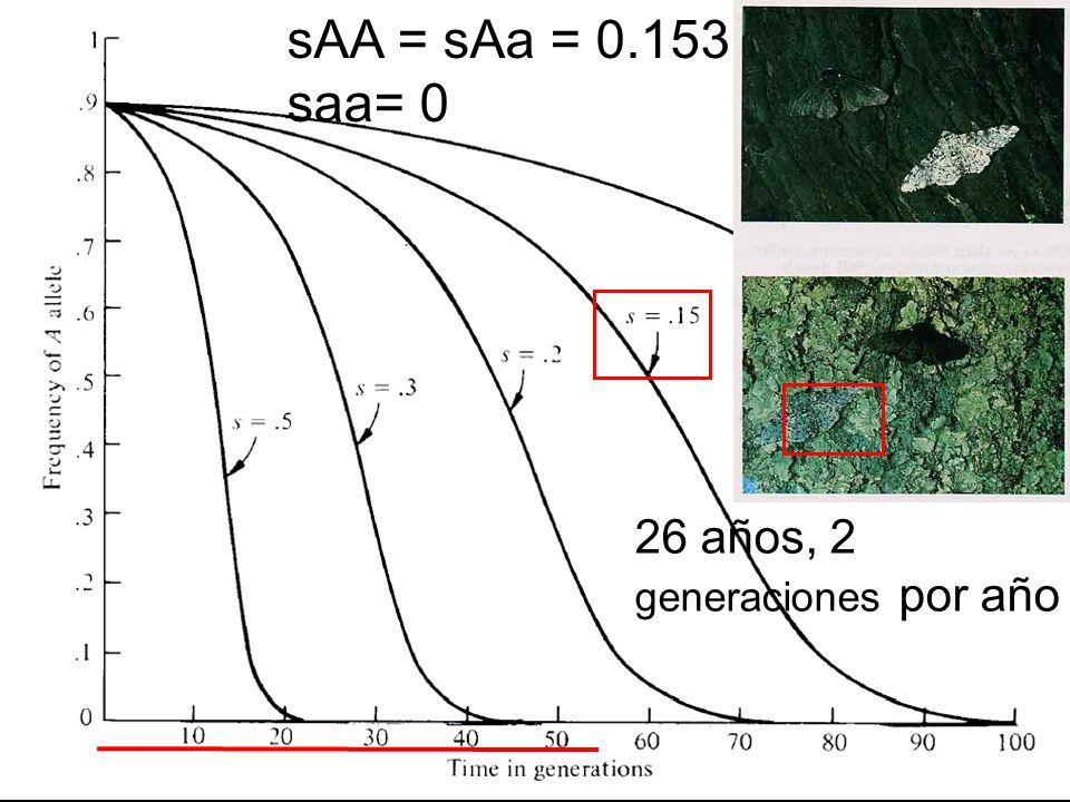 sAA = sAa = 0.153 saa= 0 26 años, 2 generaciones por año
