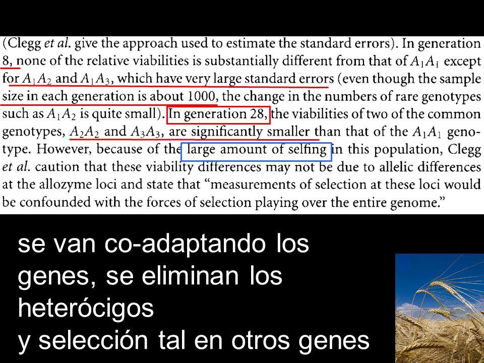 se van co-adaptando los genes, se eliminan los heterócigos y selección tal en otros genes