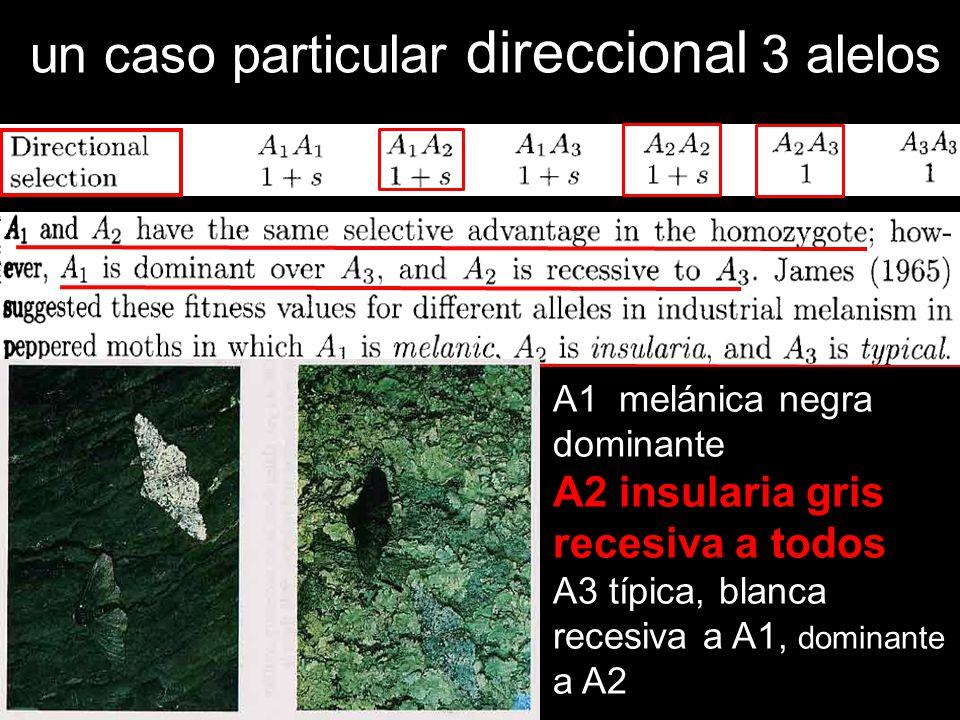 un caso particular direccional 3 alelos A1 melánica negra dominante A2 insularia gris recesiva a todos A3 típica, blanca recesiva a A1, dominante a A2