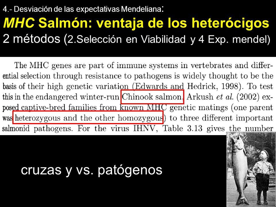 4.- Desviación de las expectativas Mendeliana : MHC Salmón: ventaja de los heterócigos 2 métodos ( 2.Selección en Viabilidad y 4 Exp. mendel) cruzas y