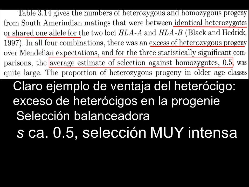 Claro ejemplo de ventaja del heterócigo: exceso de heterócigos en la progenie Selección balanceadora s ca. 0.5, selección MUY intensa