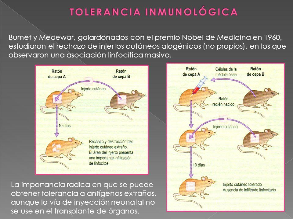 Burnet y Medewar, galardonados con el premio Nobel de Medicina en 1960, estudiaron el rechazo de injertos cutáneos alogénicos (no propios), en los que
