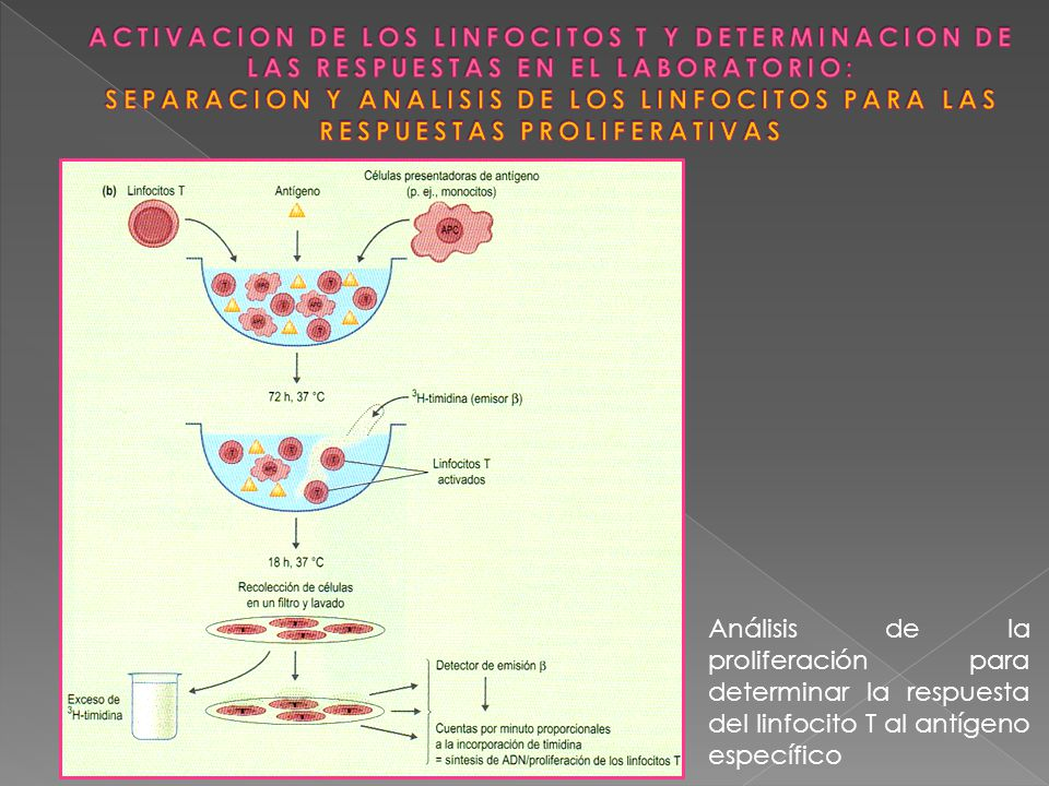 ACTIVACION DE LOS LINFOCITOS T Y MEDIR SU RESPUESTA (INVESTIGACIÓN Y EXPLORACION DIAGNOSTICA EN PACIENTES CON INMUNODEFICIENCIAS) METODOS DE ACTIVACION ACTIVADOR POLICLONAL O MITÓGENO LA LECTINA FITOHEMAGLUTININA (PHA) ENLACES CRUZADOS CON GLUCOPROTEINAS DE SUPERFICIE DE LINFOCITOS T.