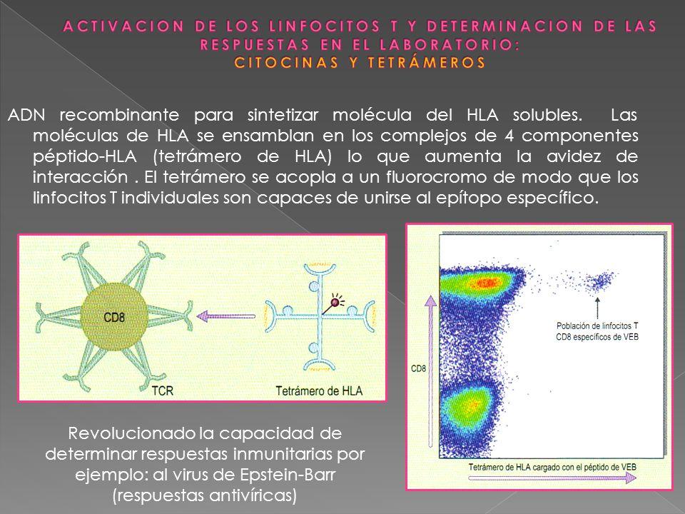 ADN recombinante para sintetizar molécula del HLA solubles. Las moléculas de HLA se ensamblan en los complejos de 4 componentes péptido-HLA (tetrámero