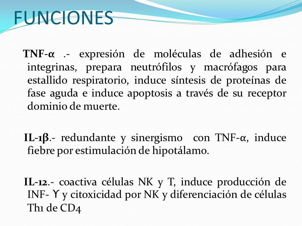 FUNCIONES TNF-α.- expresión de moléculas de adhesión e integrinas, prepara neutrófilos y macrófagos para estallido respiratorio, induce síntesis de pr
