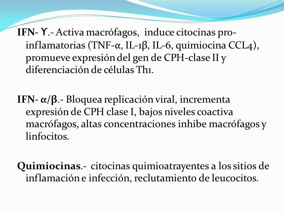 IFN- ϒ.- Activa macrófagos, induce citocinas pro- inflamatorias (TNF-α, IL-1β, IL-6, quimiocina CCL4), promueve expresión del gen de CPH-clase II y di