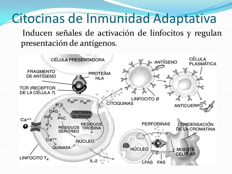 Citocinas de Inmunidad Adaptativa Inducen señales de activación de linfocitos y regulan presentación de antígenos.