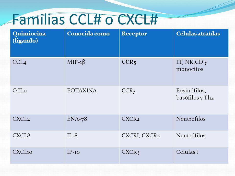 Familias CCL# o CXCL# Quimiocina (ligando) Conocida comoReceptorCélulas atraídas CCL4MIP-1βCCR5LT, NK,CD y monocitos CCL11EOTAXINACCR3Eosinófilos, bas