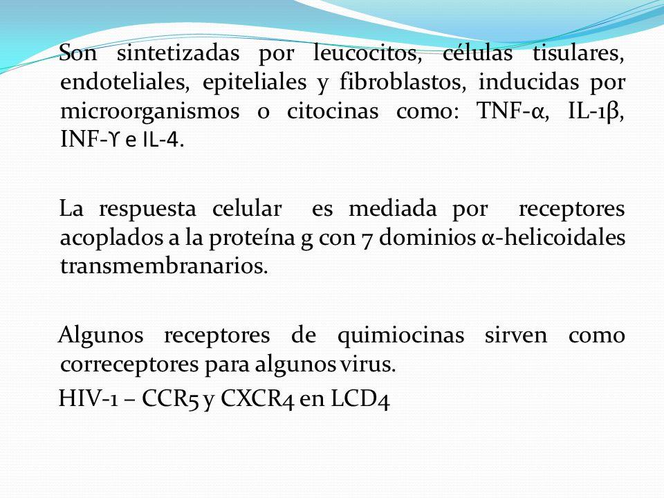 Son sintetizadas por leucocitos, células tisulares, endoteliales, epiteliales y fibroblastos, inducidas por microorganismos o citocinas como: TNF-α, I