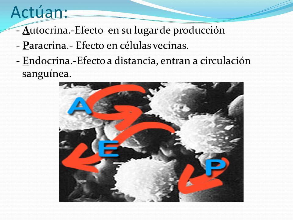 Actúan: - Autocrina.-Efecto en su lugar de producción - Paracrina.- Efecto en células vecinas. - Endocrina.-Efecto a distancia, entran a circulación s