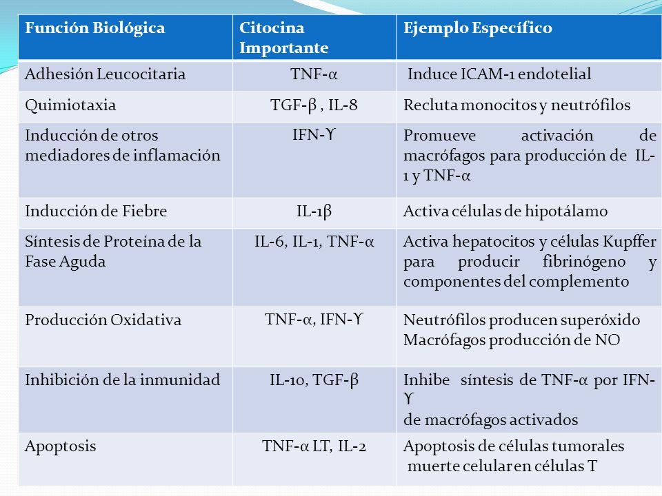 Función BiológicaCitocina Importante Ejemplo Específico Adhesión LeucocitariaTNF-α Induce ICAM-1 endotelial QuimiotaxiaTGF-β, IL-8Recluta monocitos y