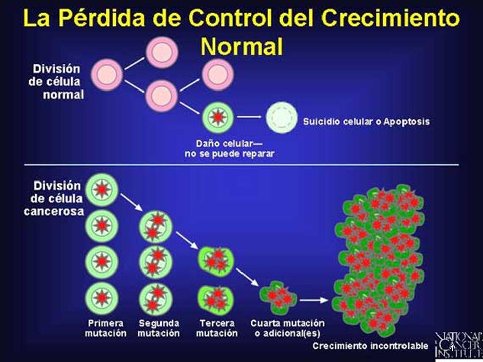 Son genes que evitan la sobreexposición de proto-oncogenes, asegurando el crecimiento normal y regulado de las células.