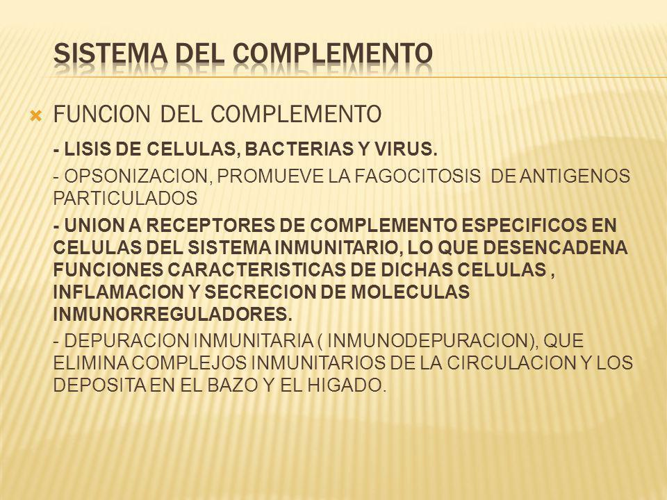 FUNCION DEL COMPLEMENTO - LISIS DE CELULAS, BACTERIAS Y VIRUS. - OPSONIZACION, PROMUEVE LA FAGOCITOSIS DE ANTIGENOS PARTICULADOS - UNION A RECEPTORES