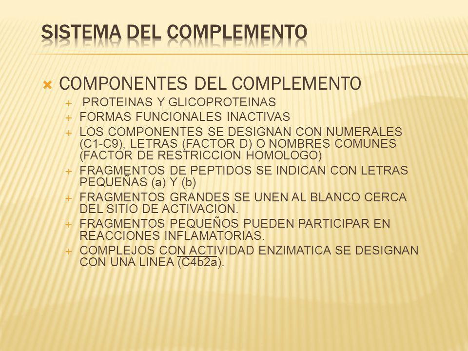 COMPONENTES DEL COMPLEMENTO PROTEINAS Y GLICOPROTEINAS FORMAS FUNCIONALES INACTIVAS LOS COMPONENTES SE DESIGNAN CON NUMERALES (C1-C9), LETRAS (FACTOR