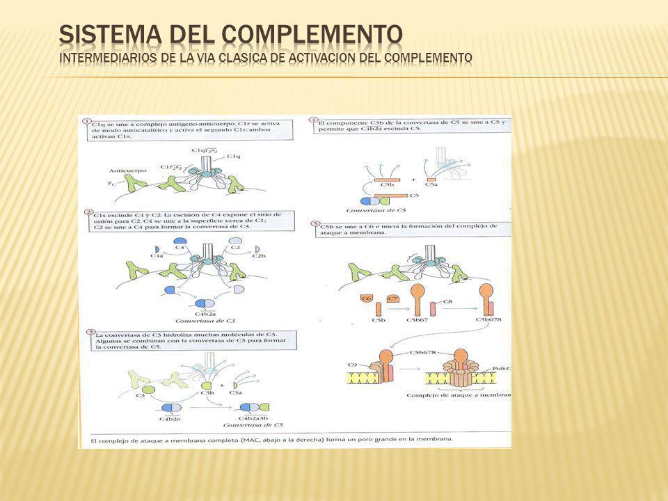 DEFICIENCIAS DEL COMPLEMENTO DEFICIENCIA DE C1q, C1r,C1s,C4 Y C2 PRODUCEN ENFERMEDADES COMO LUPUS ERITEMATOSO SISTEMICO, GLOMERULONEFRITIS Y VASCULITIS.