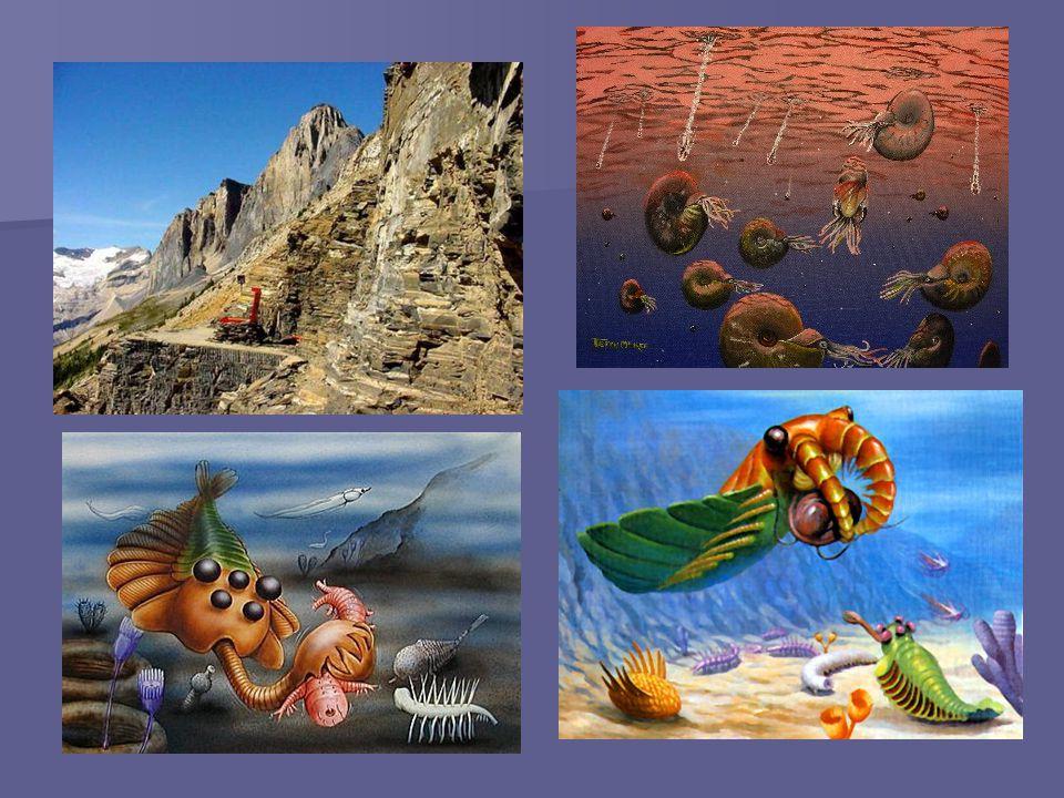 Segunda gran extinción: Hace 444 millones de años hubo dos extinciones masivas que marcaron la transición entre los períodos Ordovícico y Silúrico que, si se cuentan juntas, fueron la segunda extinción masiva más trágica en la historia de la Tierra.