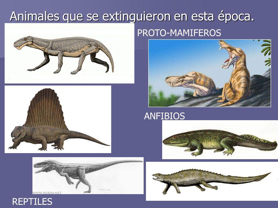 Animales que se extinguieron en esta época. PROTO-MAMIFEROS ANFIBIOS REPTILES
