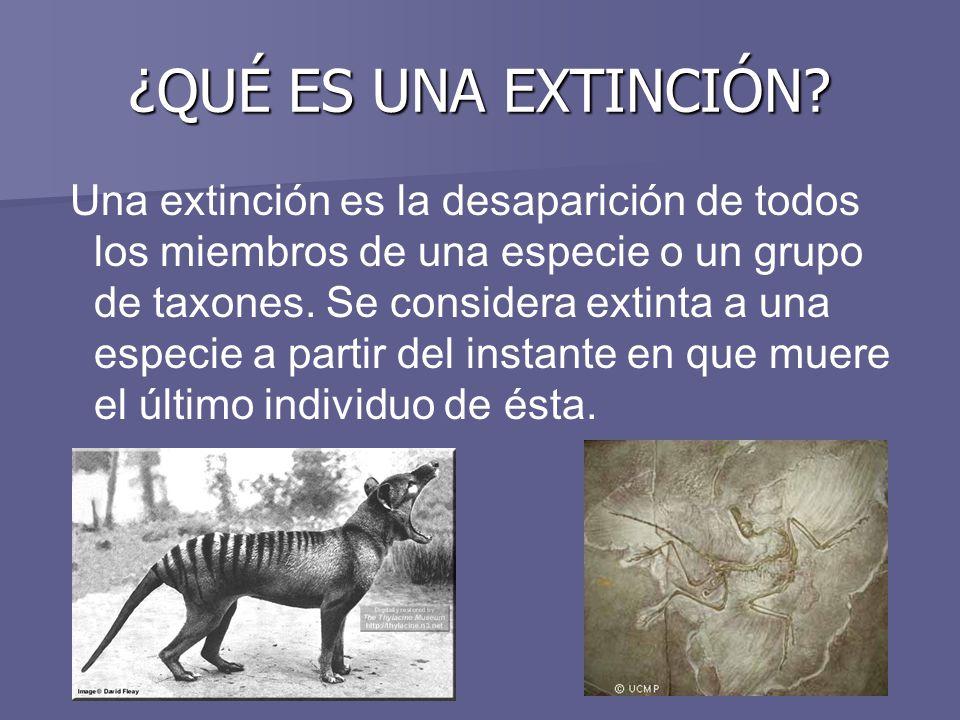 ¿QUÉ ES UNA EXTINCIÓN? Una extinción es la desaparición de todos los miembros de una especie o un grupo de taxones. Se considera extinta a una especie