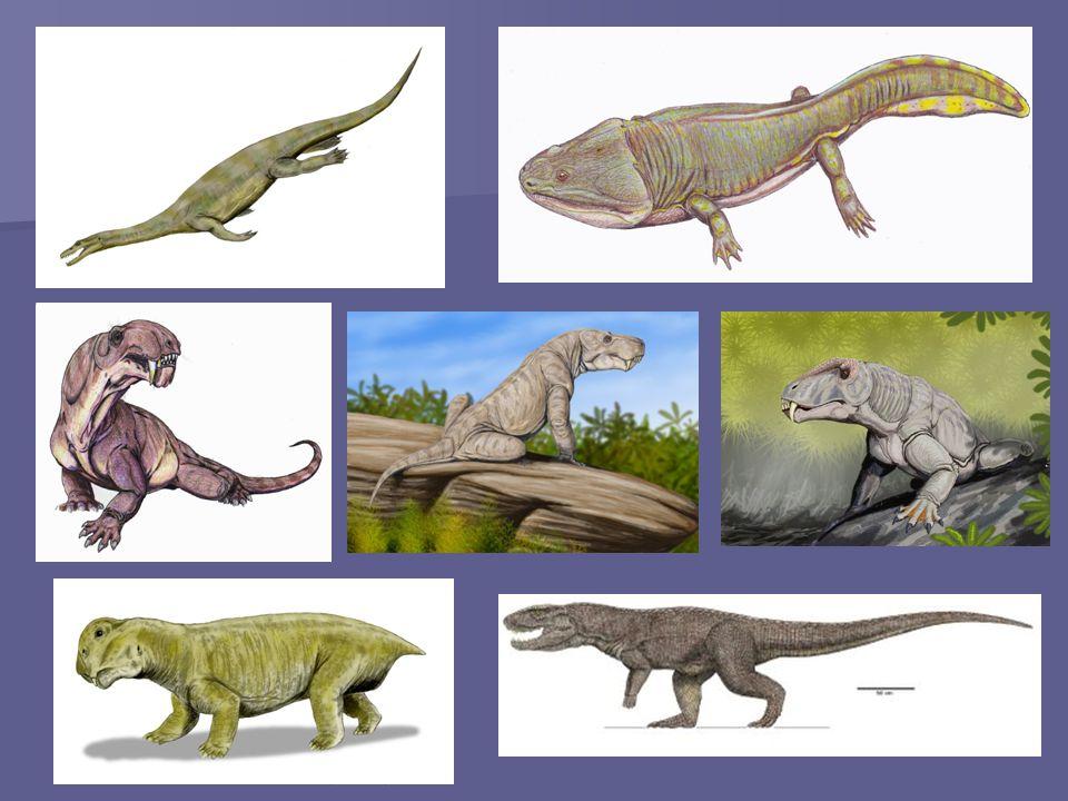 Sexta gran extinción: La extinción masiva del Cretácico- Terciario fue un período de extinciones masivas de especies hace aproximadamente 65 millones de años.