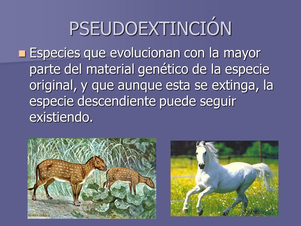 PSEUDOEXTINCIÓN Especies que evolucionan con la mayor parte del material genético de la especie original, y que aunque esta se extinga, la especie des