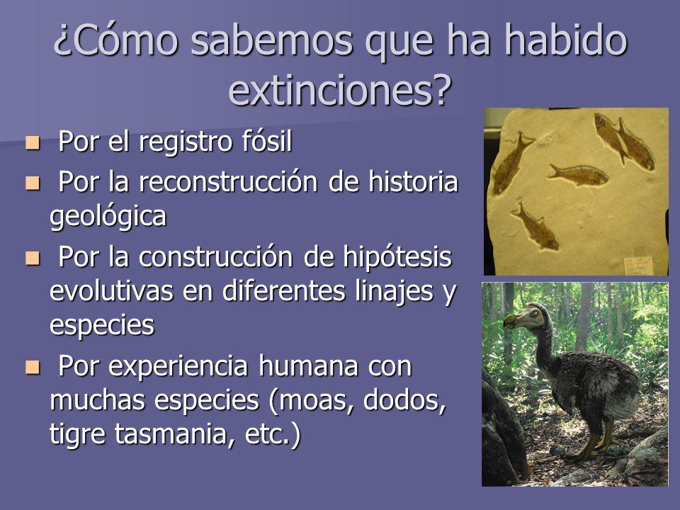 ¿Cómo sabemos que ha habido extinciones? Por el registro fósil Por el registro fósil Por la reconstrucción de historia geológica Por la reconstrucción