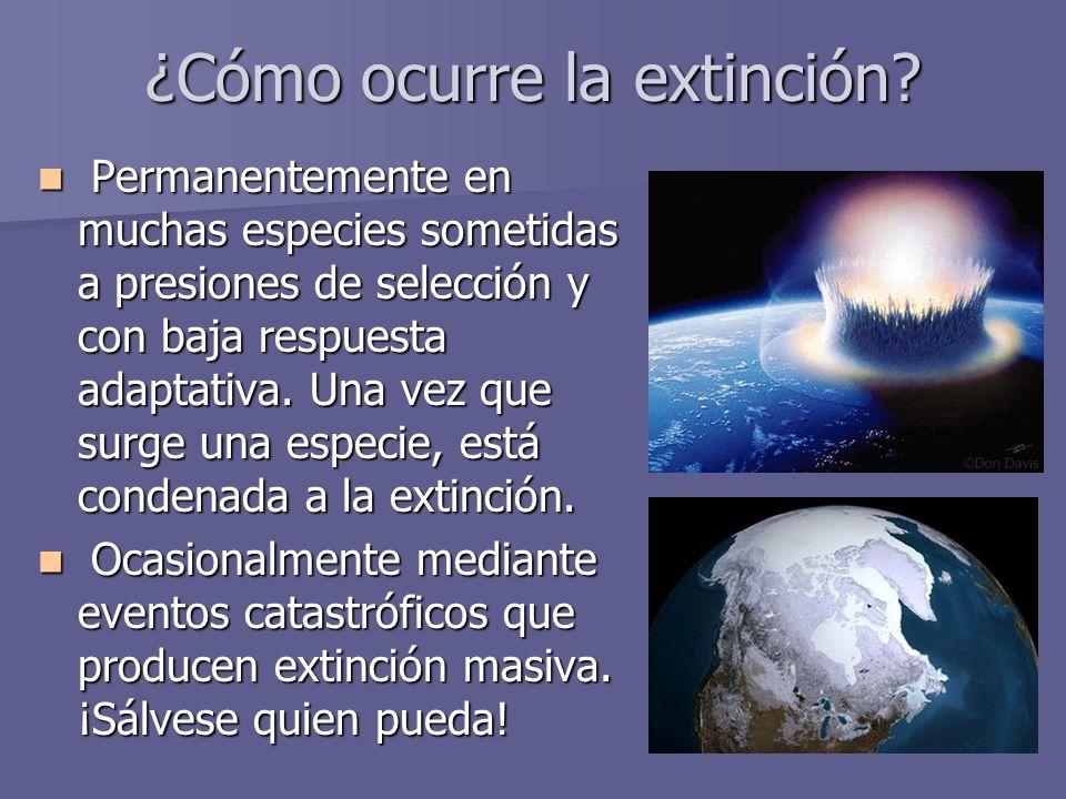 ¿Cómo ocurre la extinción? Permanentemente en muchas especies sometidas a presiones de selección y con baja respuesta adaptativa. Una vez que surge un