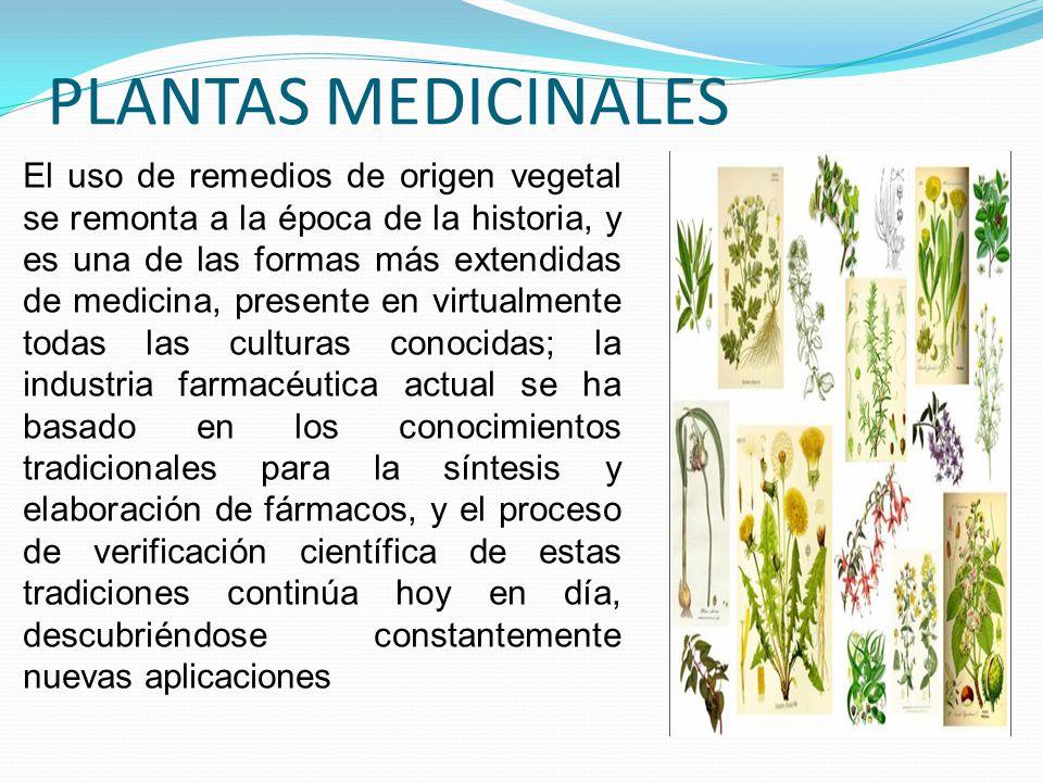 LAS PLANTAS MEDICINALES. Las plantas medicinales tienen una gran historia; se dice que los indígenas y nuestros antepasados las usaban para curar a lo