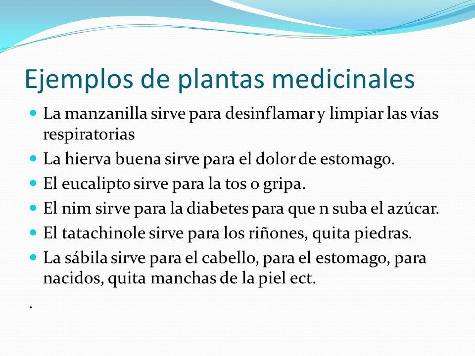 Los productos milagro son muy diferentes a las plantas medicinales, porque éstas no engañan, su uso a través del tiempo se ha visto cada vez más favor