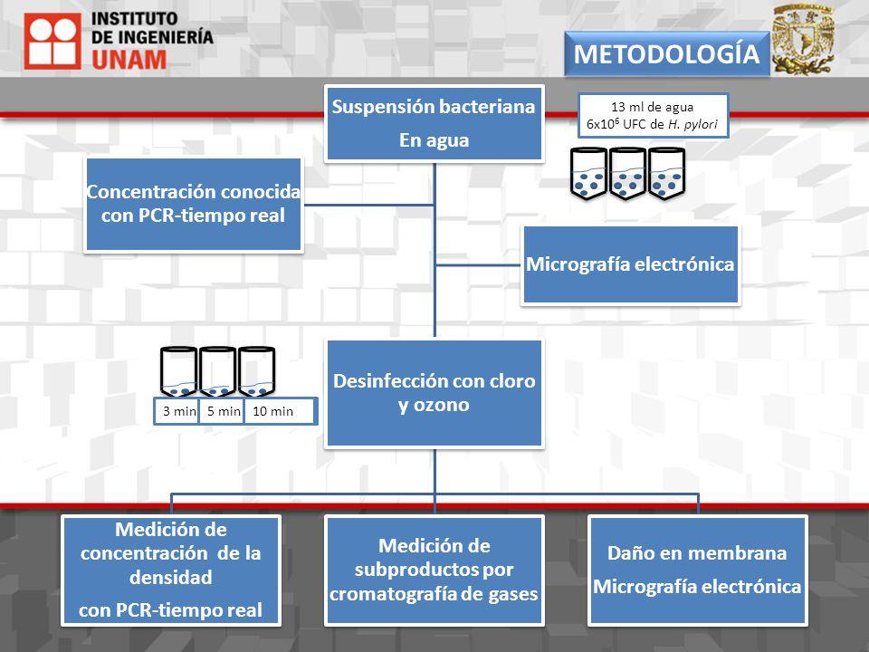 Suspensión bacteriana En agua Medición de concentración de la densidad con PCR-tiempo real Medición de subproductos por cromatografía de gases Daño en