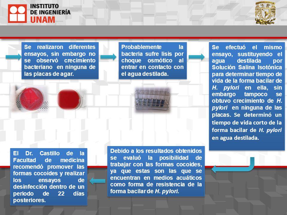 El Dr. Castillo de la Facultad de medicina recomendó promover las formas cocoides y realizar los ensayos de desinfección dentro de un periodo de 22 dí