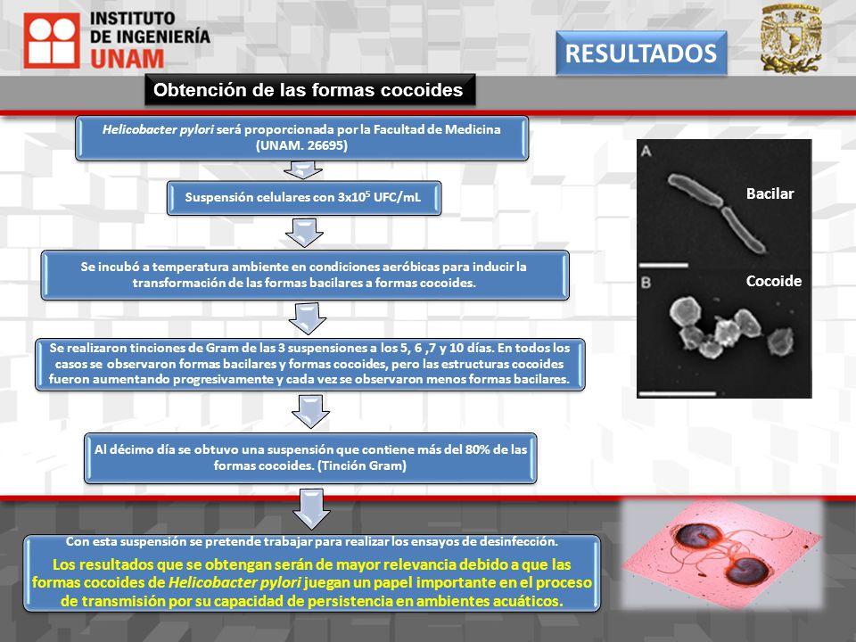 Helicobacter pylori será proporcionada por la Facultad de Medicina (UNAM. 26695) Suspensión celulares con 3x10 5 UFC/mL Se incubó a temperatura ambien