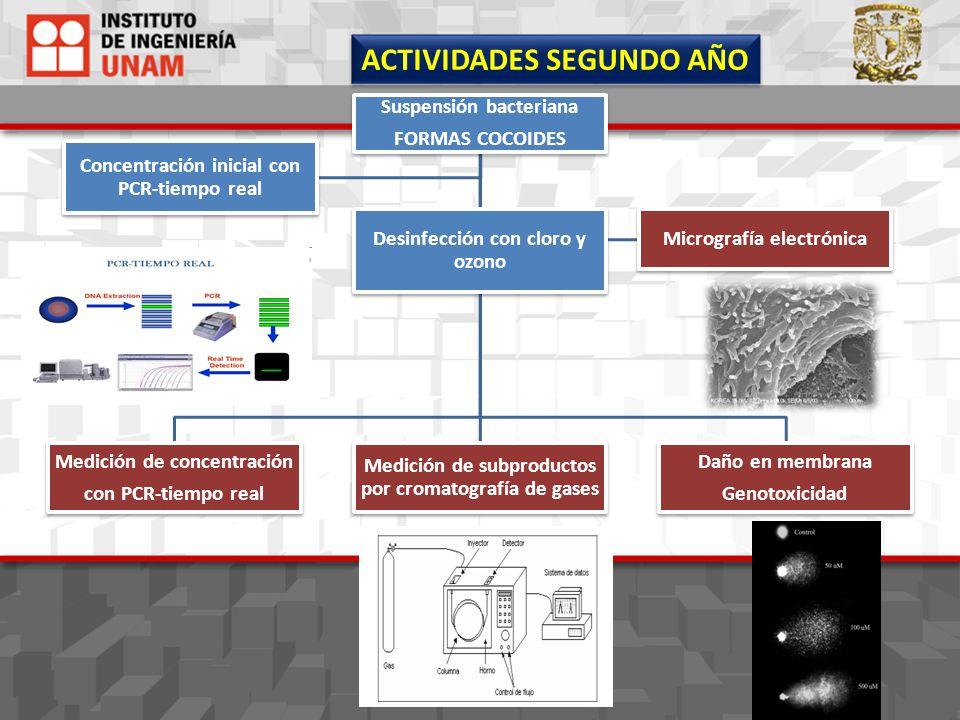 Suspensión bacteriana FORMAS COCOIDES Medición de concentración con PCR-tiempo real Medición de subproductos por cromatografía de gases Daño en membra