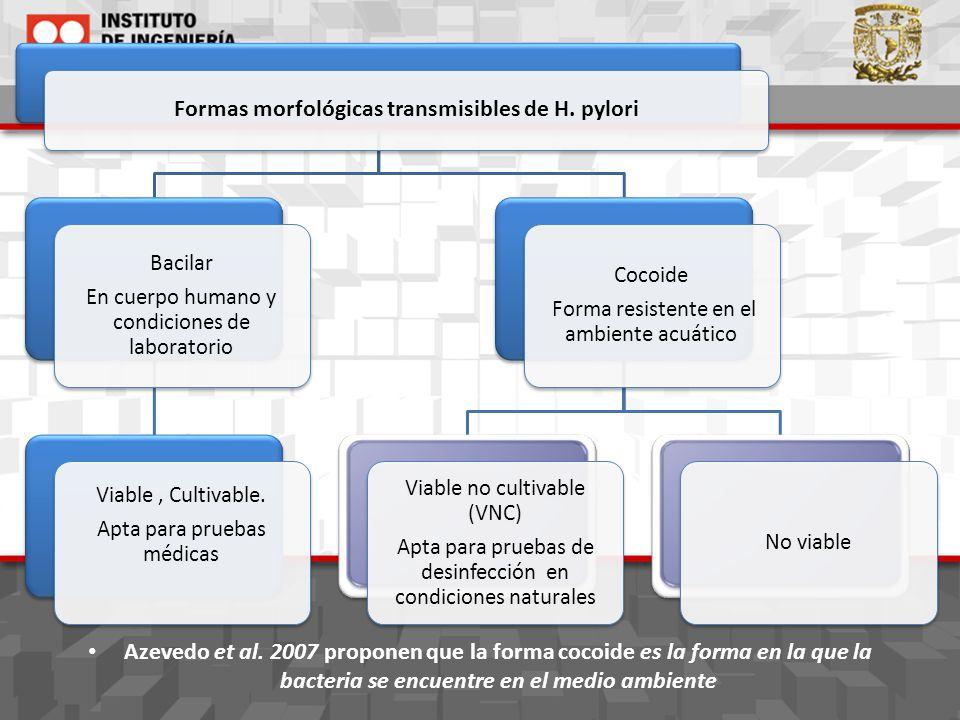 Formas morfológicas transmisibles de H. pylori Bacilar En cuerpo humano y condiciones de laboratorio Viable, Cultivable. Apta para pruebas médicas Coc