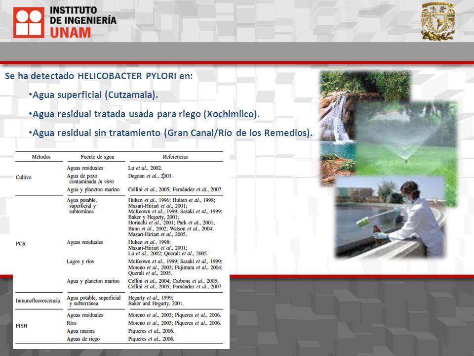Se ha detectado HELICOBACTER PYLORI en: Agua superficial (Cutzamala). Agua residual tratada usada para riego (Xochimilco). Agua residual sin tratamien