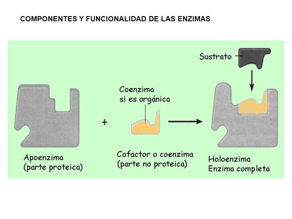 COMPONENTES Y FUNCIONALIDAD DE LAS ENZIMAS