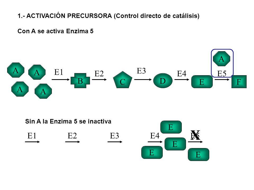 1.- ACTIVACIÓN PRECURSORA (Control directo de catálisis) Con A se activa Enzima 5 A A A A B C D EF E1 E2 E3 E4E5 A E E1E2E3E4E5 E E E X Sin A la Enzim