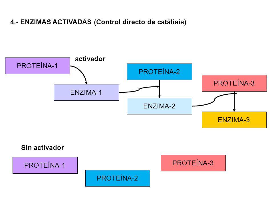 4.- ENZIMAS ACTIVADAS (Control directo de catálisis) ENZIMA-1 PROTEÍNA-1 PROTEÍNA-2 ENZIMA-2 PROTEÍNA-3 ENZIMA-3 activador Sin activador PROTEÍNA-1 PR