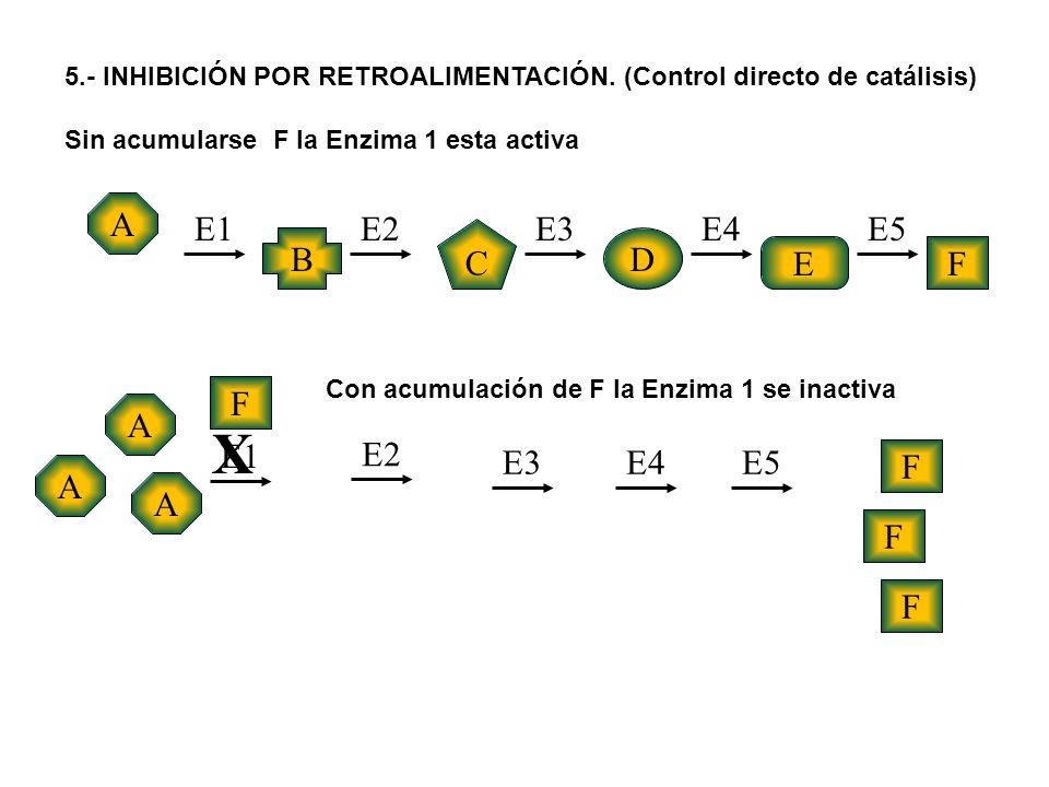 5.- INHIBICIÓN POR RETROALIMENTACIÓN. (Control directo de catálisis) Sin acumularse F la Enzima 1 esta activa A A A A B C D EF E1E2E3E4E5 E1 E2 E3E4E5