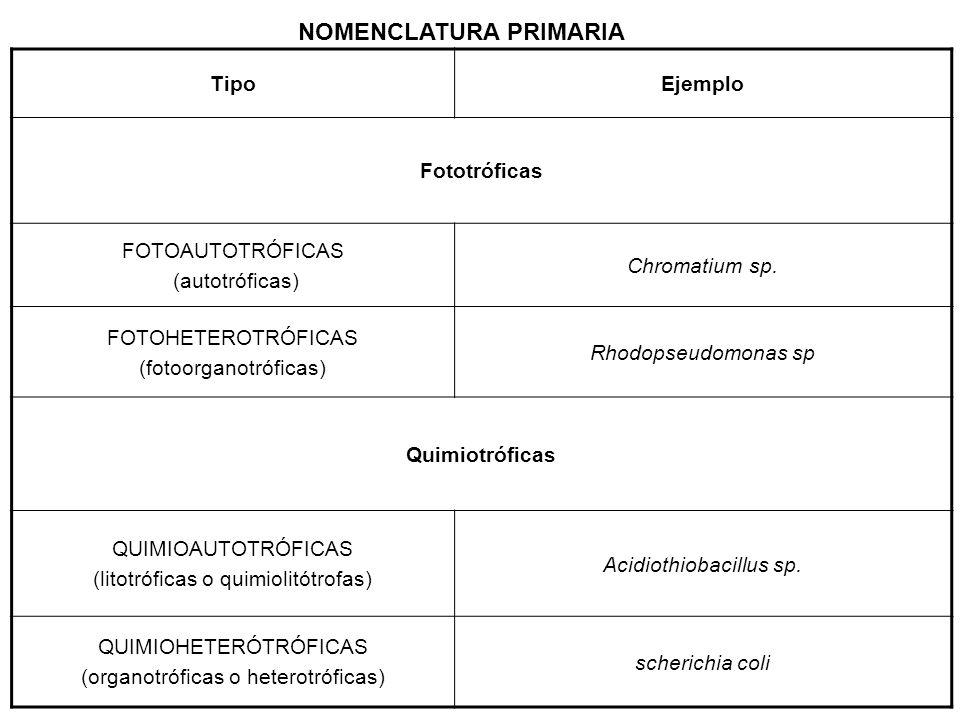 OBTENCIÓN DE ENERGÍA DE LOS QUIMIOAUTÓTROFOS Los microorganismos quimioautótrofos (litótrofos) se presentan en muchas variedades.